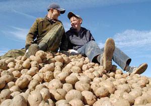 Белорусских школьников заставят убирать картофель